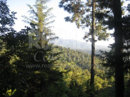 2258 AMAZING LAND FOR SALE IN EL HATO, WITH A CEDAR FOREST
