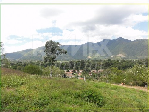 3123 LAND FOR SALE ON THE WAY TO SAN FELIPE DE JESUS (8,034v2 Aprox)