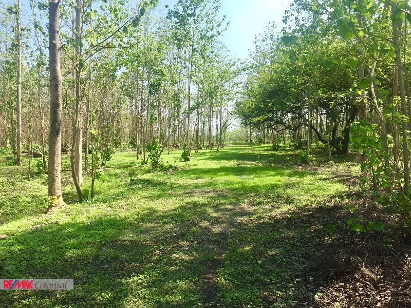 4511 LAND FOR SALE ON HIGHWAY TO PUERTO QUETZAL (14 Manzanas)