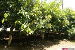 4744-010-High-Quality-land-for-planting-easy-access-from-main-road-of-San-Luis-Pueblo-Nuevo