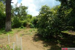 4744-016-High-Quality-land-for-planting-easy-access-from-main-road-of-San-Luis-Pueblo-Nuevo