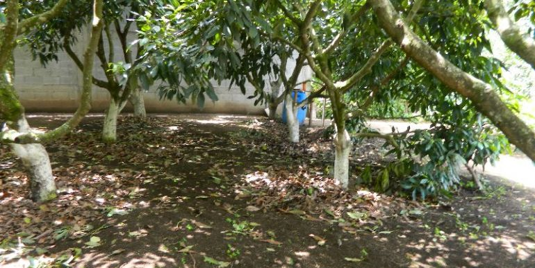4744-022-High-Quality-land-for-planting-easy-access-from-main-road-of-San-Luis-Pueblo-Nuevo