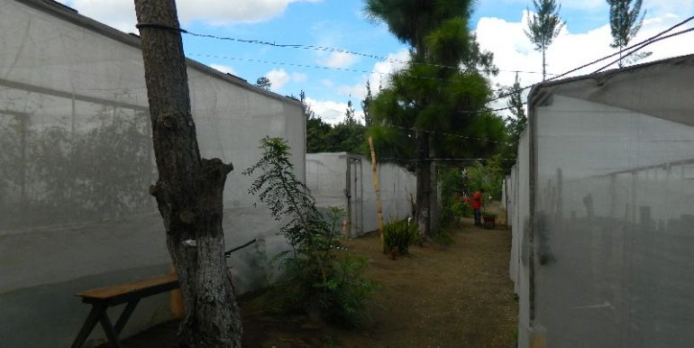 4744-028-High-Quality-land-for-planting-easy-access-from-main-road-of-San-Luis-Pueblo-Nuevo