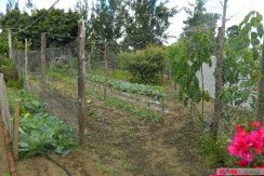 4744-035-High-Quality-land-for-planting-easy-access-from-main-road-of-San-Luis-Pueblo-Nuevo