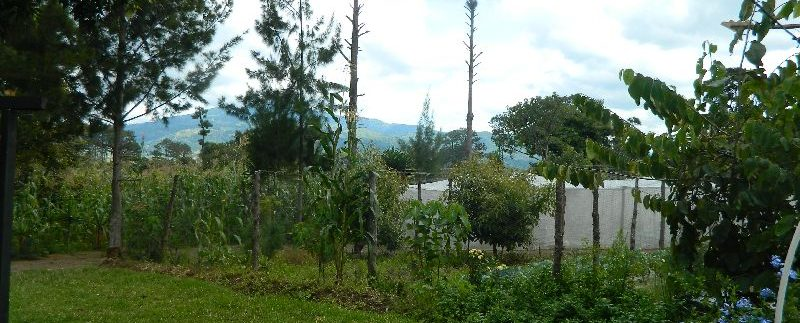 4744-039-High-Quality-land-for-planting-easy-access-from-main-road-of-San-Luis-Pueblo-Nuevo