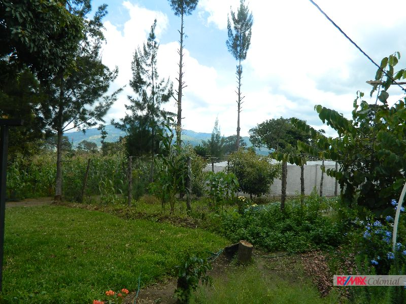 4744 High Quality land for planting easy access from main road of San Luis Pueblo Nuevo