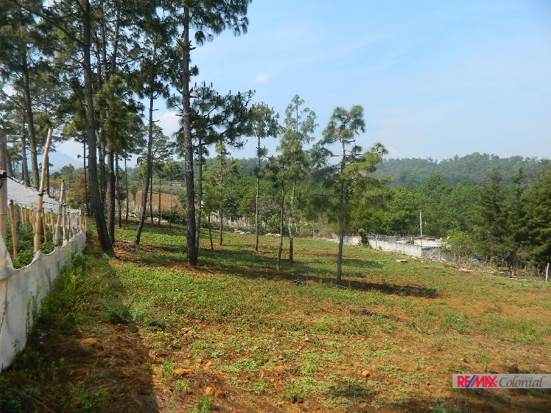 4901 BIG LAND IN SANTO DOMINGO XENACOJ  11,179.82 sq mts.  (16,000 vrs 2)